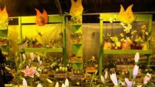 Цветы Удмуртии-2010(Традиционная выставка цветов в Ижевске. Февраль-2010., 2010-02-17T11:18:53.000Z)