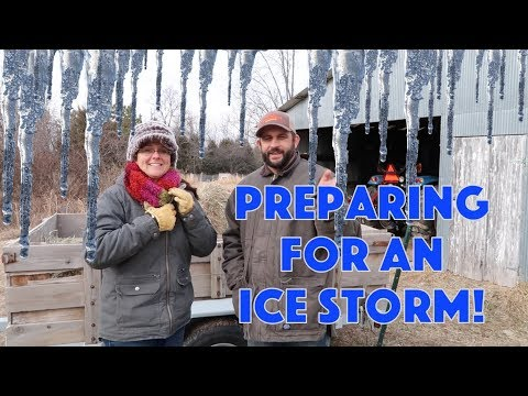 Ice Storm On The Way Preparing Animals And Homestead