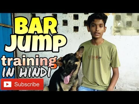 How to train bar jump to dog in Hindi | Dog training in Hindi |