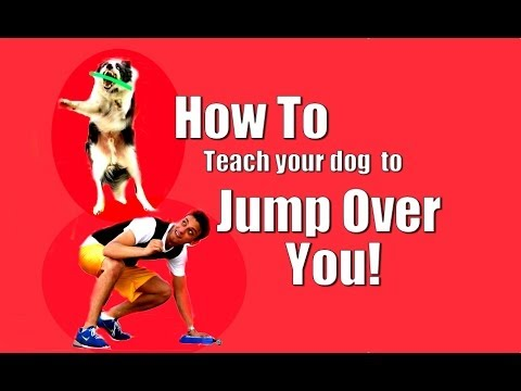 How to Teach your Dog to Jump Over You!