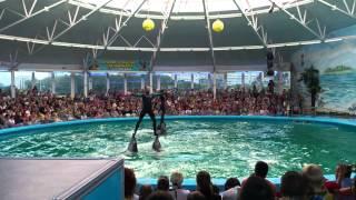 Минский дельфинарий. Всем смотреть!(, 2012-08-11T09:20:43.000Z)