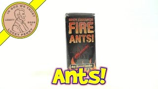 Spicy Cinnamon Fire Ant Shaped Candies, Accoutrements - Unique Candy Series