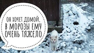 Замерзающего кота можно спасти