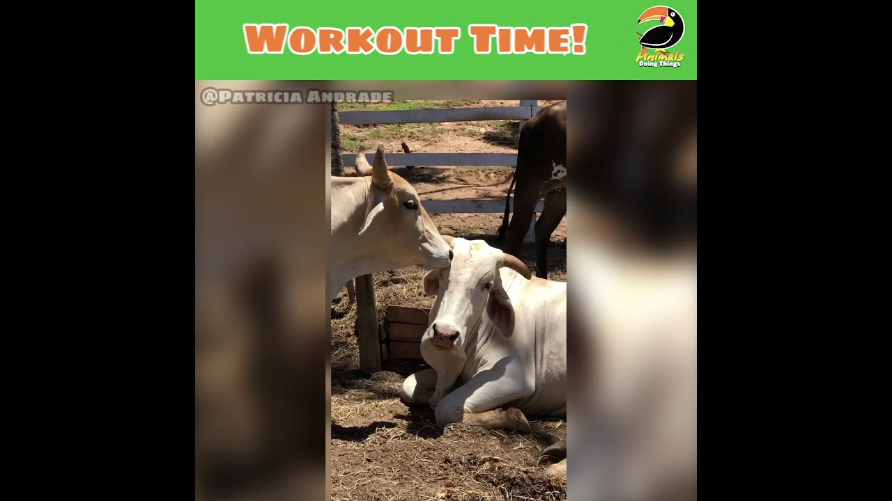 The Most Adorable Animal Workout Partners Help Spot Their Hoomans!
