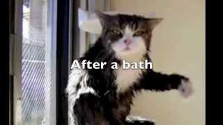 New Funny Animal Epic Fail Compilation Video  2016   Funniest / Most viewed Cat Video Ever