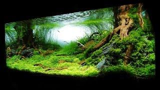 Необычайно красивый аквариум на 375 литров