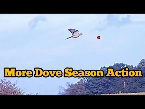 More Dove Season Action (SHOTKAM)