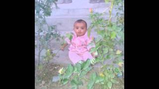Jana gul aw Banir gul - old pashto attan song Paktia