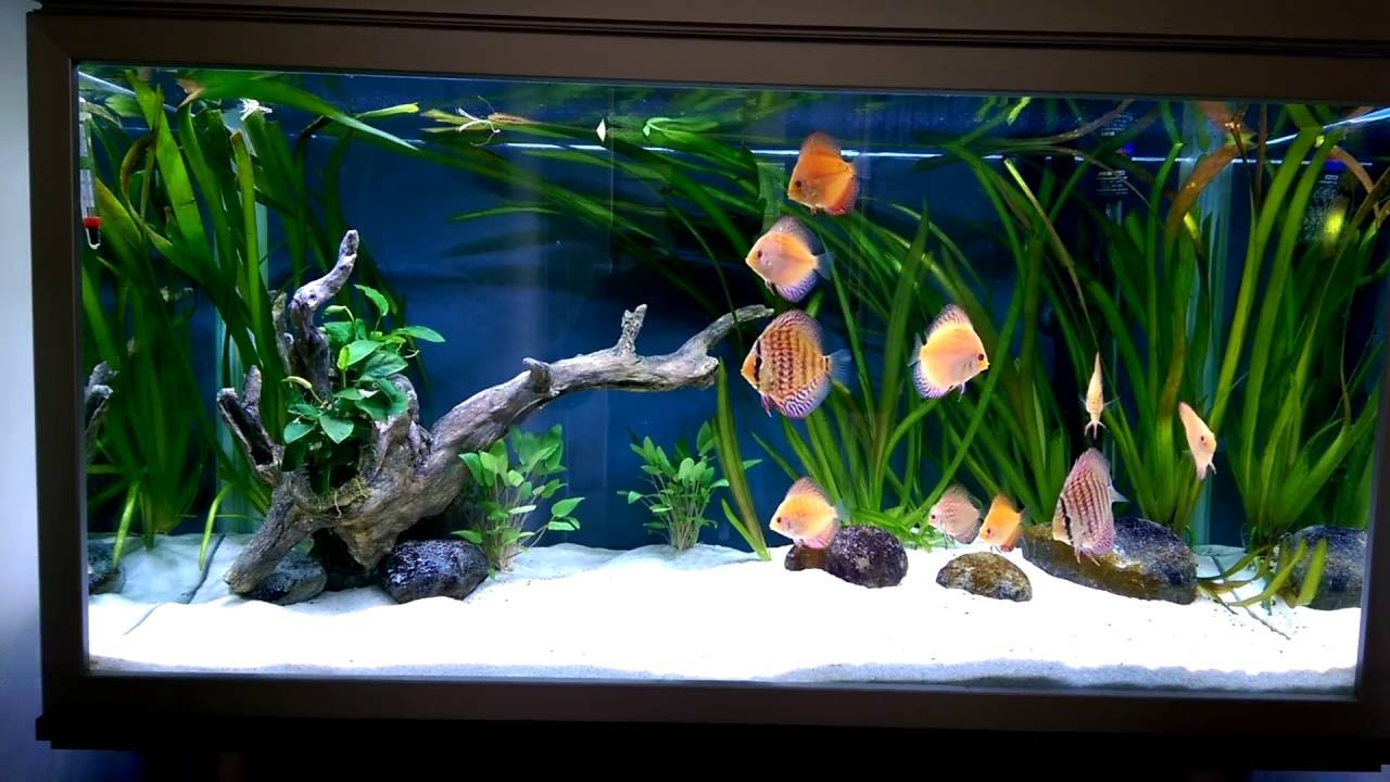 stendker discus in 250 litre with 45w cree led youtube. Black Bedroom Furniture Sets. Home Design Ideas