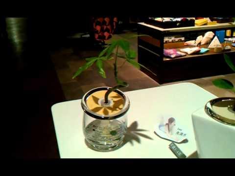 8 台灣栽研生技盆栽 累不倒 綠瑪麗