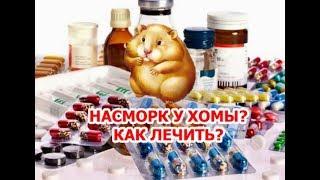 Хомяк простудился? Как самостоятельно лечить насморк у хомячка.