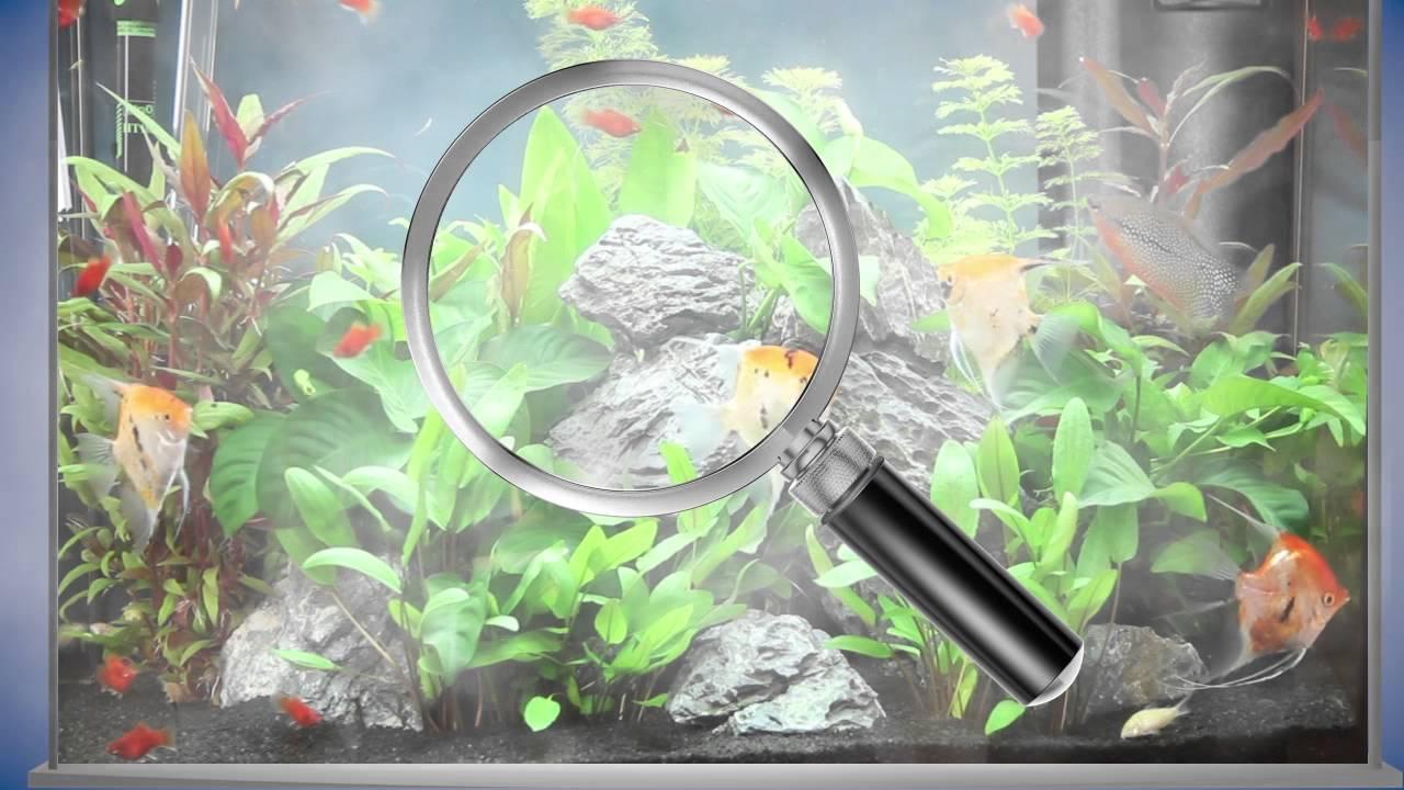 Clarifier une eau trouble en aquarium - YouTube