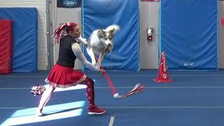 Dog Dance / Trick Training, over 40 dog tricks !!!