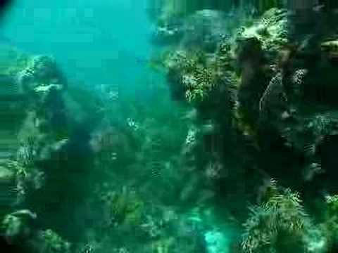 scuba, keys