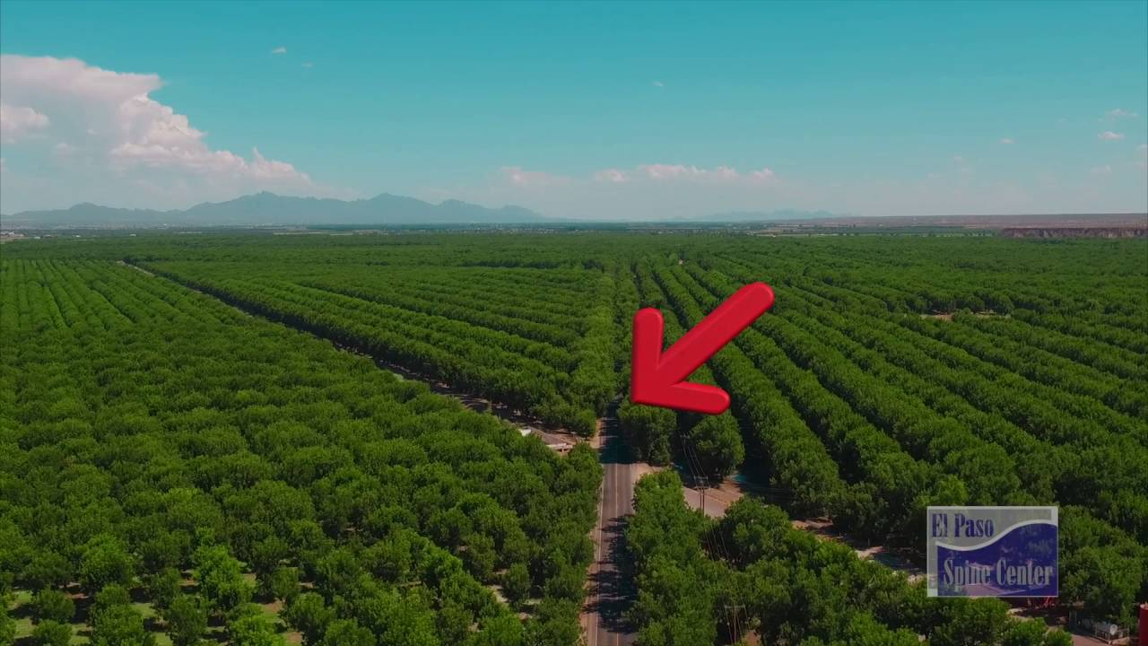 Pecan Orchards Mesilla New Mexico Youtube