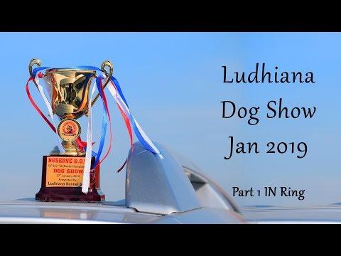 Ludhiana Dog Show Jan 2019 Part 1 - In Ring