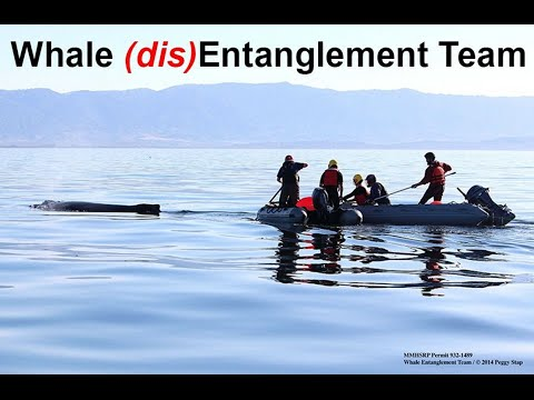 Whale Entanglement Team