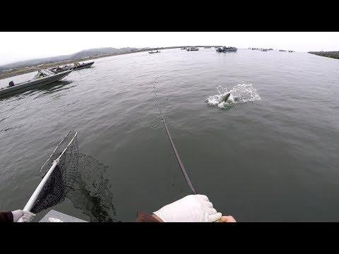 Salmon Fishing In Gold Beach Oregon