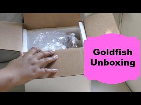 Goldfish Unboxing   Lewnews