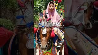 kuda renggong / dancing horse