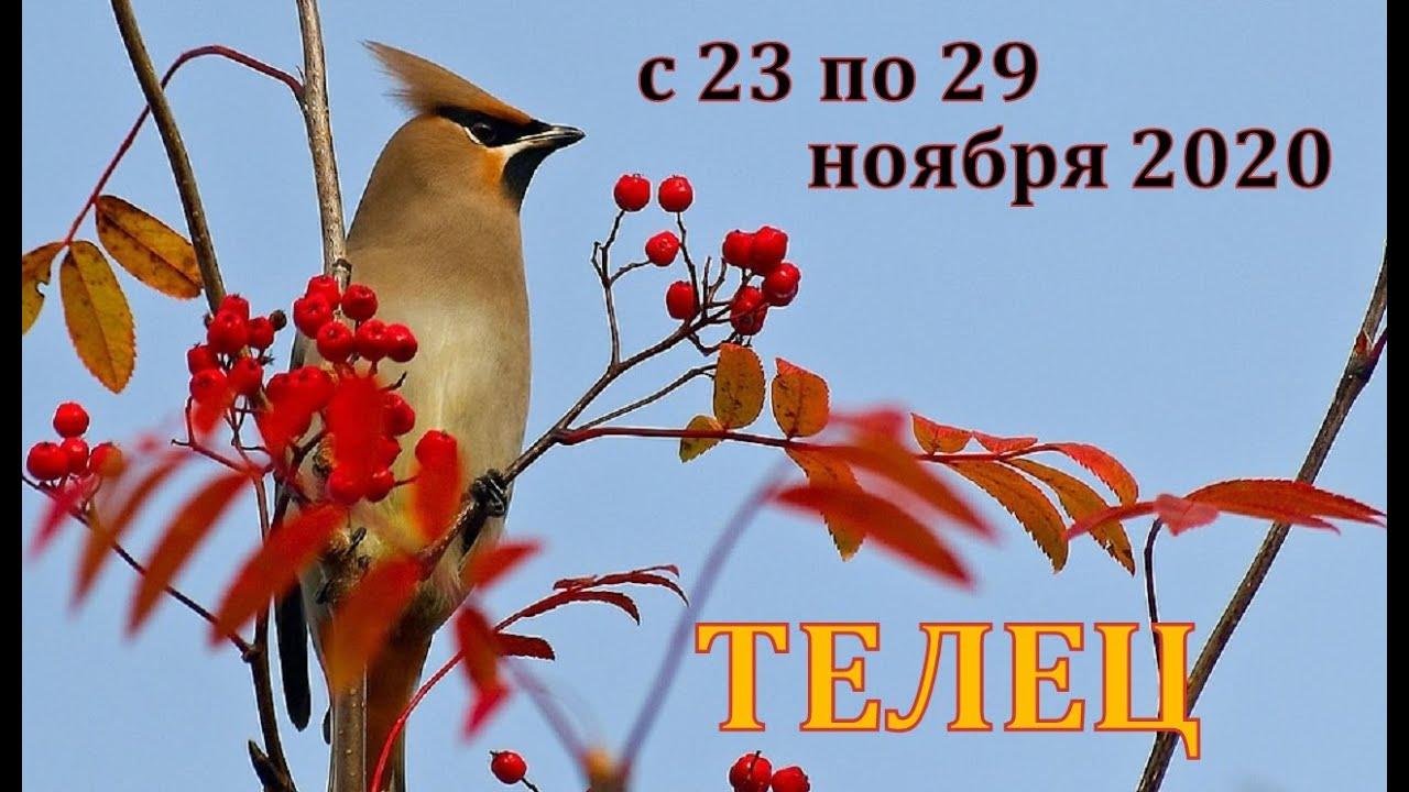 ТЕЛЕЦ С 23 ПО 29 НОЯБРЯ 2020 ТАРО ПРОГНОЗ РАБОТА ДЕНЬГИ ОТНОШЕНИЯ