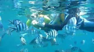 沖縄のかわいいお魚に餌付けを楽しみながらシュノーケリングを楽しもう...
