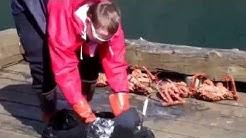 Alaska Woman gets live King Crab in Sitka!