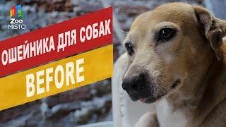 Ошейник для собак  BEFORE | Обзор ошейник для собак  BEFORE