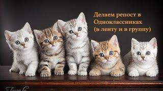 Как пригласить в группу Одноклассники, людей, не добавляя в друзья? Автор: Вероника Тихонова.