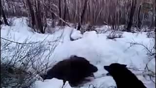 Приколы про охоту