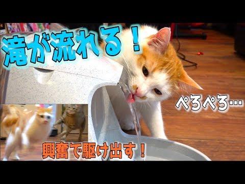 ��゙�れる給水機買����ら猫���゙興奮���り駆�回る�?