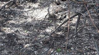 Բյուրական․ անտառի վերացումը լուրջ խնդիր է բնակիչների համար
