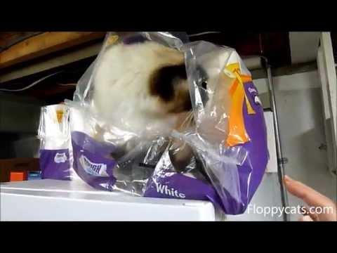 Ragdoll Cat Charlie in Viva Paper Towel Packaging - ねこ - ラグドール - Floppycats
