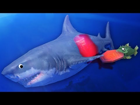 EATING THE GREAT WHITE SHARK AT LEVEL 1!?!! - Feed and Grow Fish Game / Gameplay