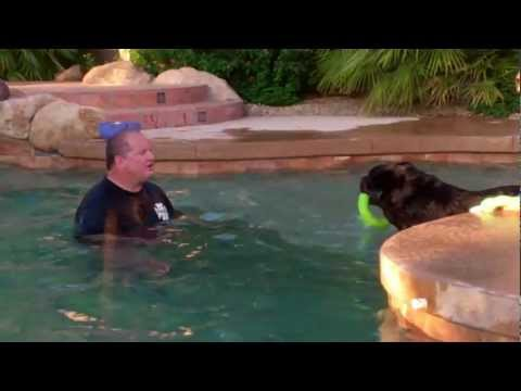 Lakesides 'Johnny' Quest - 1st swimming session
