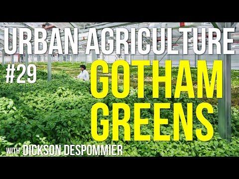 Urban Agriculture #29: Gotham Greens