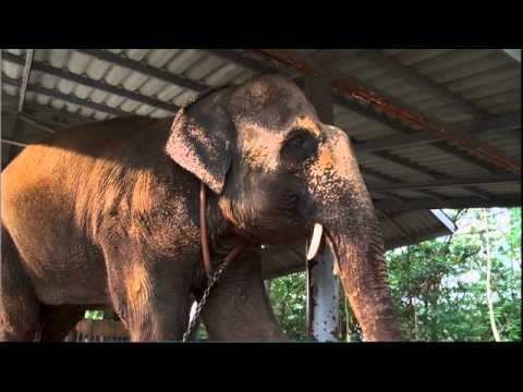 MOTALA'S TEARS: Miracle in Thailand