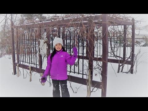 Winter Organic Grapes - Backyard Horticulture