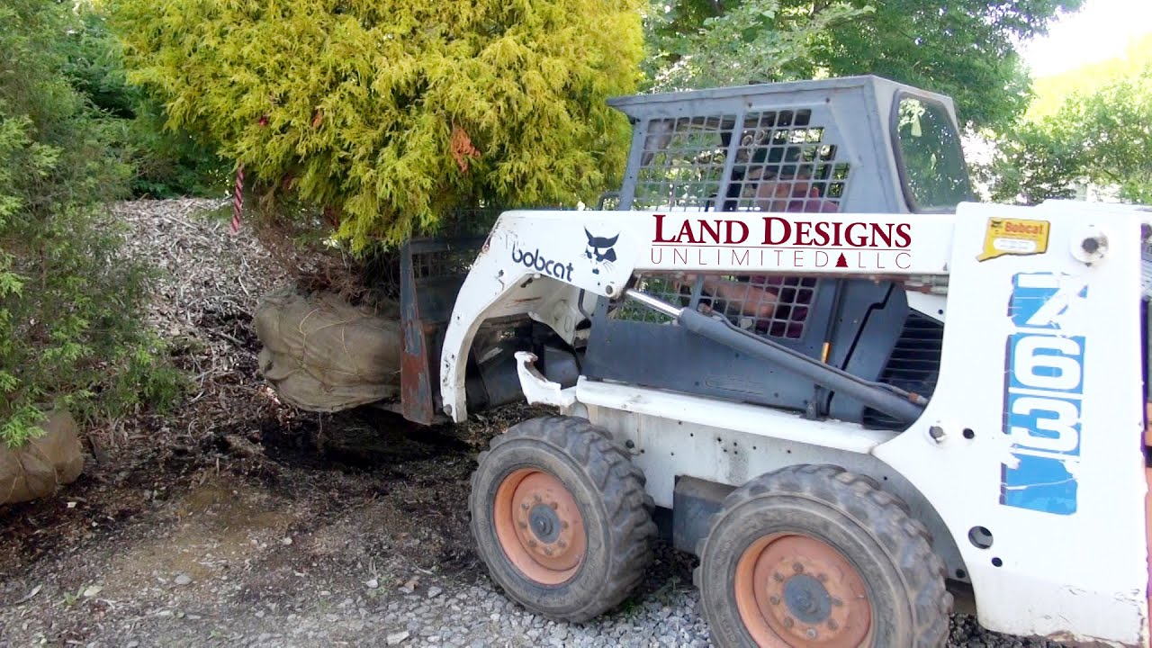 Controls On Bobcat 763 And Planting Gold Mop Chamaecyparis 30 Youtube