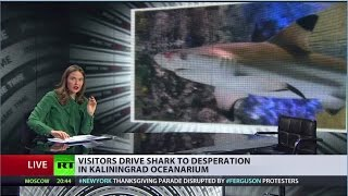 Russia's most stressful job: shark in oceanarium