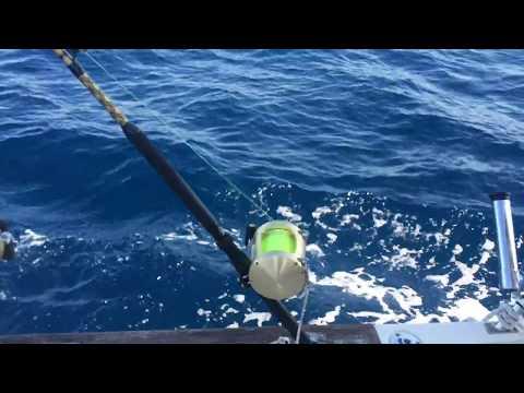 MARLIN BLANCO DETRAS DE UNA MUESTRA PEGADA AL BARCO PESCANDO EN ISLA CRISTINA POR THE TATTOO FISHER