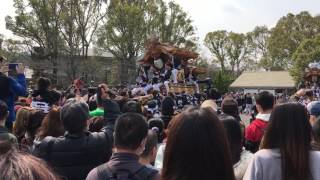 千早赤坂村60周年パレード 桐山