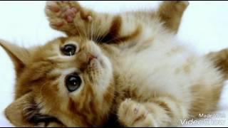 Гороскоп кошек