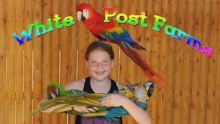 Parrot show in Long Island at  White Post Farms