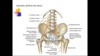 FMPM MOOCs - Traumatismes des nerfs périphériques - Pr. El Haoury