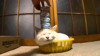 пока кот спит