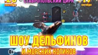 Шоу дельфинов и морских котиков