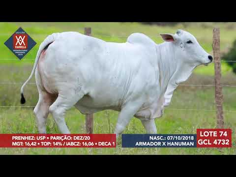 LOTE 74 GCL 4732