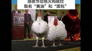 """感恩节总统火鸡就位取名""""黄油""""和""""面包"""""""
