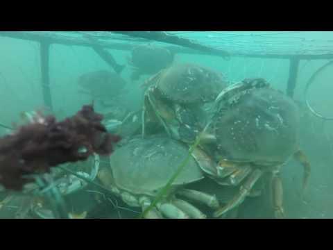 GoPro Crabbing Bandon, Oregon (2016)